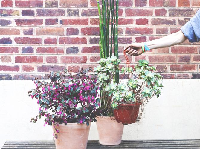 nouveau une jeune soci t livre et entretient mes plantes elle d coration. Black Bedroom Furniture Sets. Home Design Ideas
