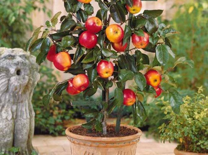 comment planter 1 arbre fruitier