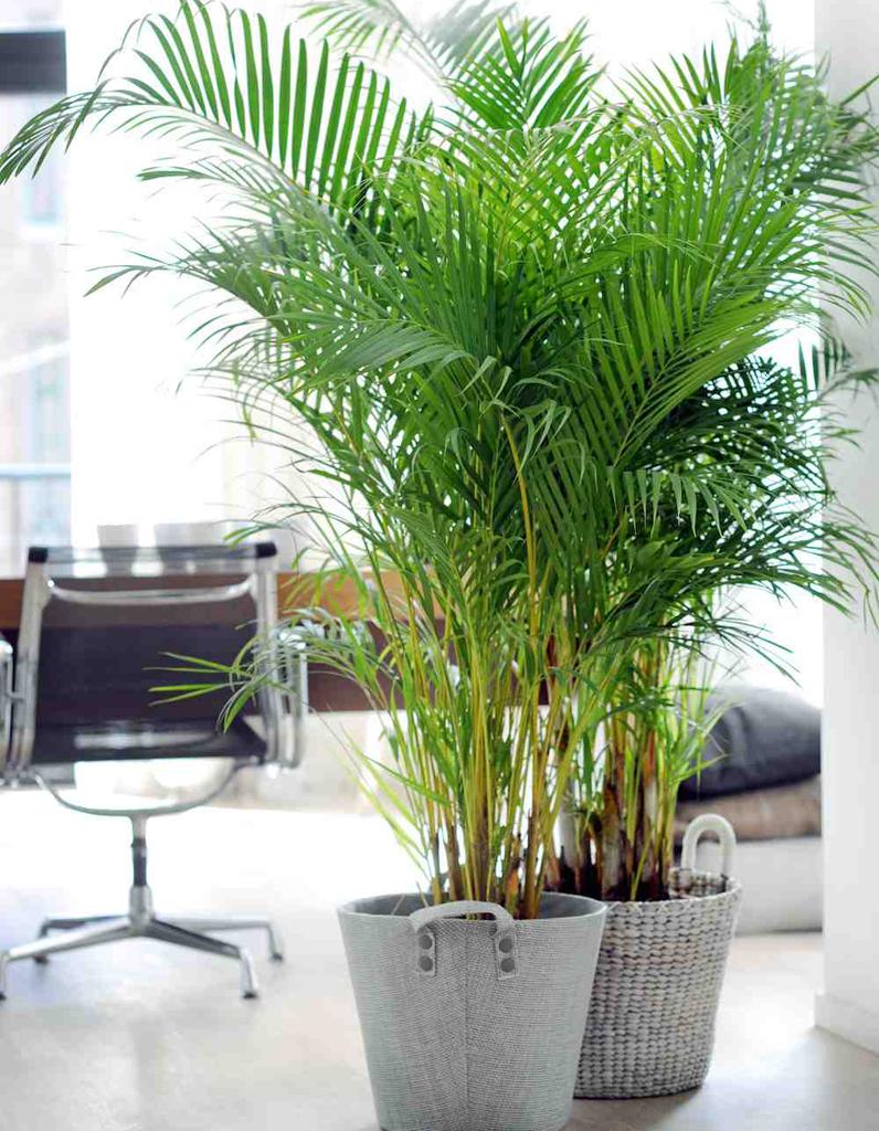 Plante d 39 hiver nos 12 plantes pr f r es elle d coration for Arrosage plante interieur