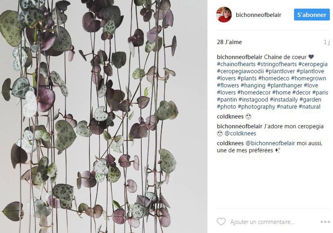 plantes tendance sur instagram top 5 des plantes les plus en vogue sur instagram elle d coration. Black Bedroom Furniture Sets. Home Design Ideas