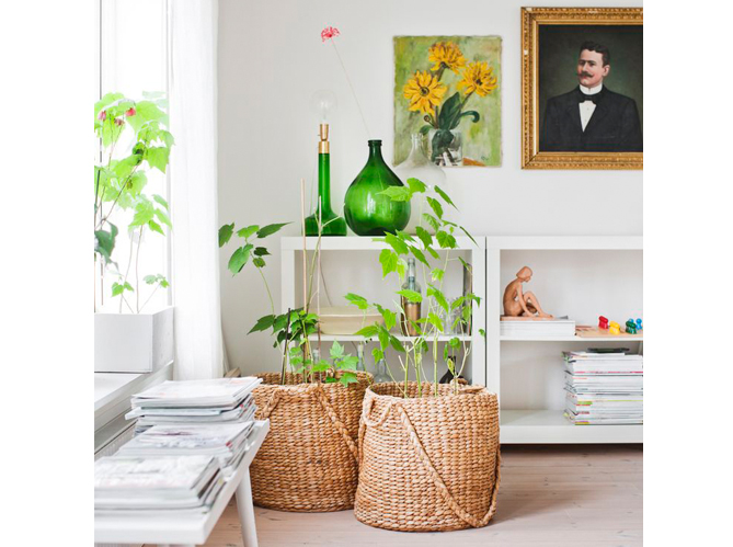 Plantes et fleurs 15 id es pour d corer mon int rieur for Site pour decorer sa maison