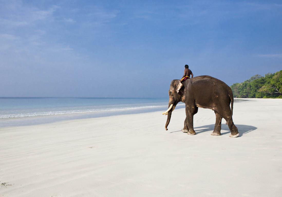 Balade Dos D L Phant Sur La Plage Iles Andaman Les Meilleurs Endroits De L Archipel En