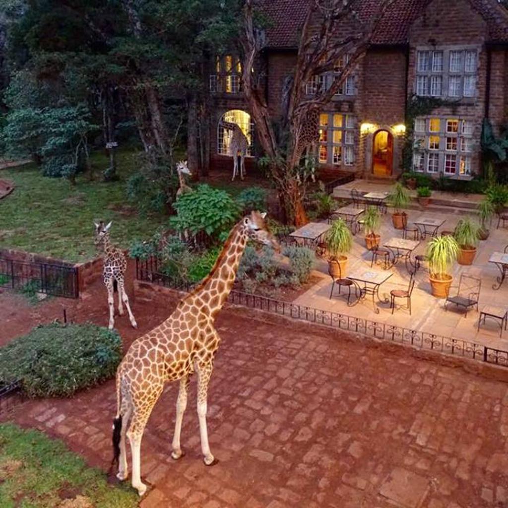 Hotel insolite animaux 10 spots pour voir des animaux for Hotel insolite